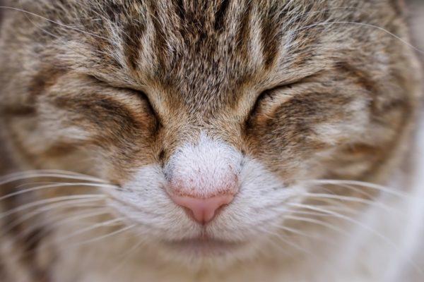 猫が頭突きをしてくる!どんな意味が込められているの?