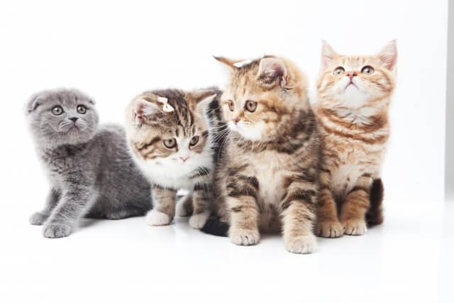 猫の鳴き声の違いの意味は?「にゃー」と長いときには要求?