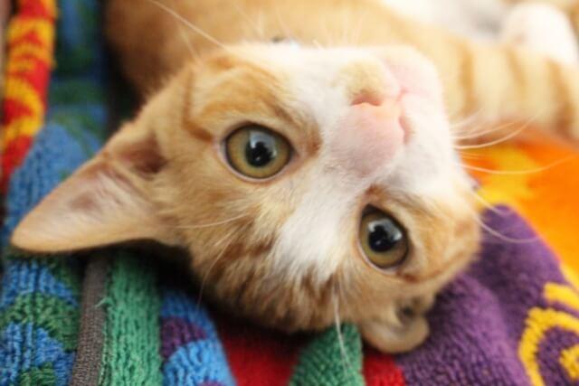 猫は「またたび」がなぜ好きなの?可愛すぎて笑える?!