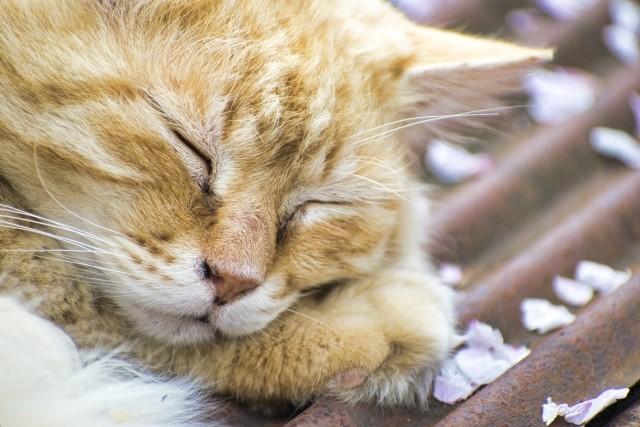 猫の名前ランキング!メス猫限定で調べた結果・・・