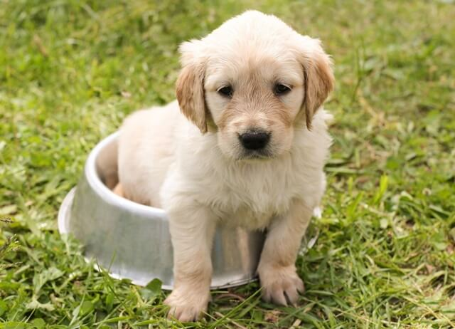 犬を飼うのに必要なものとは?用意をするべきものは14個!