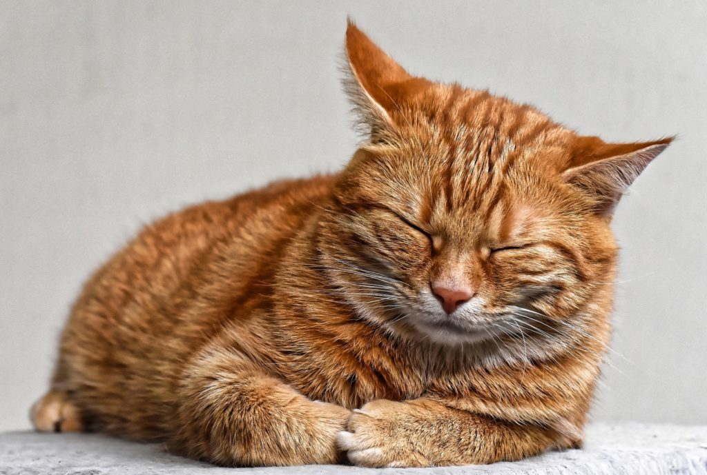猫が便秘に!マッサージはツボを知っていると効果的!